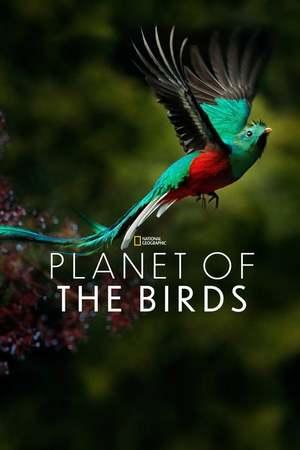 Poster: Planet der Vögel