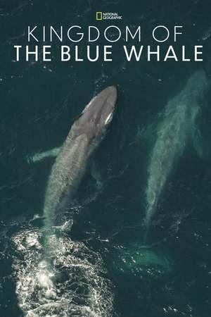 Poster: Im Reich des Blauwals